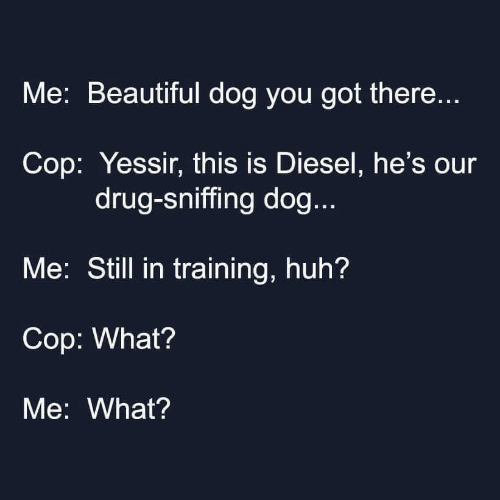 Sniffing: Me: Beautiful dog you got there...  Cop: Yessir, this is Diesel, he's our  drug-sniffing dog...  Me: Still in training, huh?  Cop: What?  Me: What?