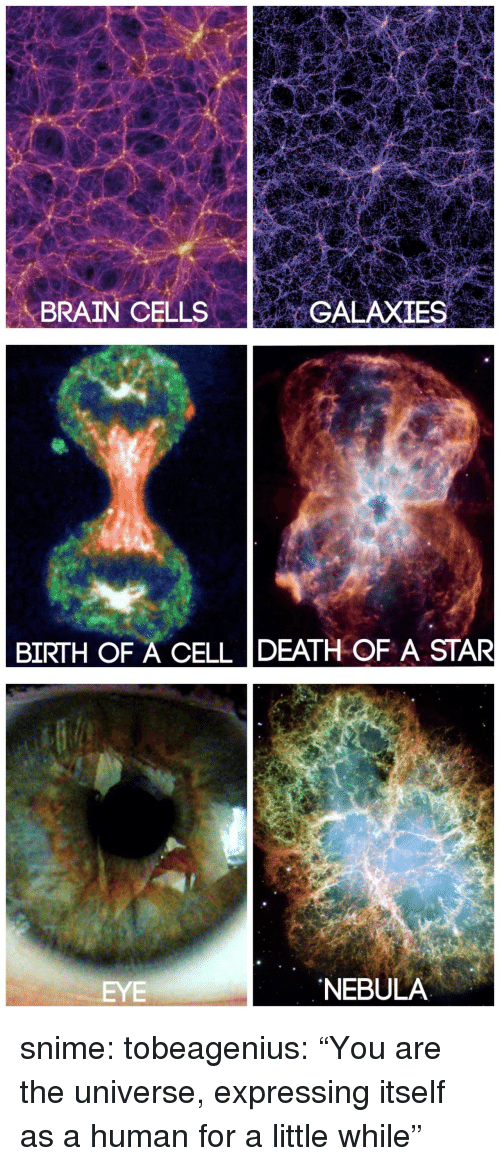 """Tumblr, Blog, and Brain: ME  BRAIN CELLSGALAXIES   BIRTH OF A CELL DEATH OF A STAR   EYE  NEBULA snime: tobeagenius:  """"You are the universe, expressing itself as a human for a little while"""""""