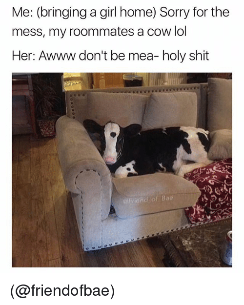 Bae, Lol, and Shit: Me: (bringing a girl home) Sorry for the  mess, my roommates a cow lol  Her: Awww don't be mea- holy shit  d of Bae (@friendofbae)