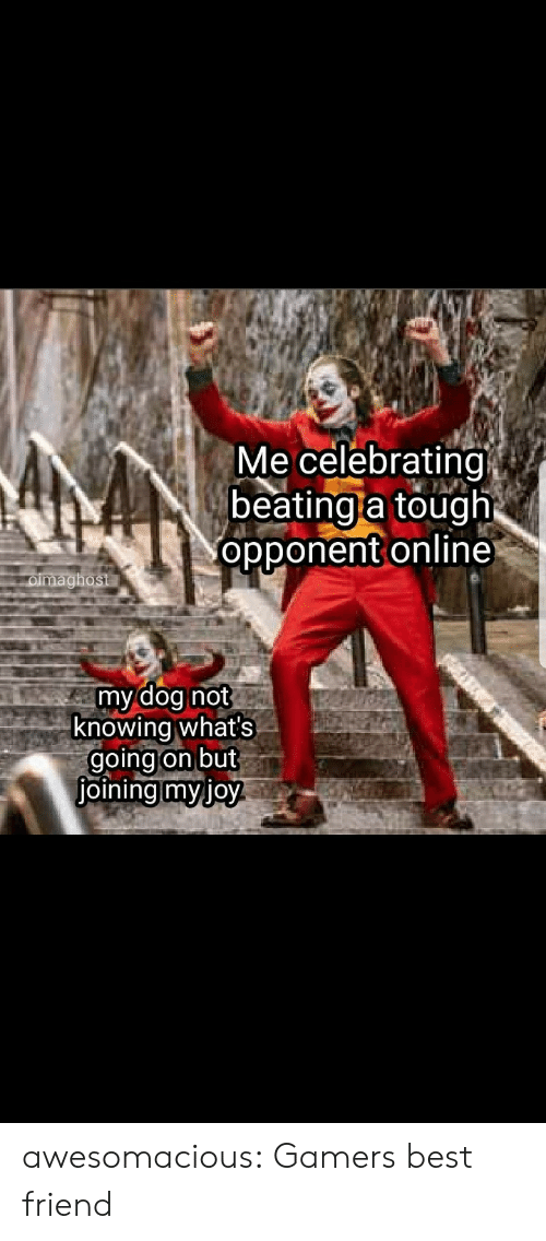 opponent: Me celebrating  beating a tough  opponent online  oimaghost  my dog not  knowing what's  going on but  joining myjoy awesomacious:  Gamers best friend