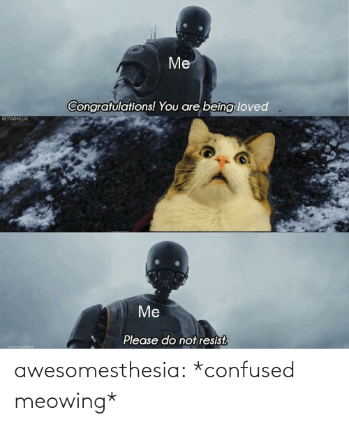 Loved: Me  Congratulations! You are beîng loved  REYISBAEOK  Me  Please do not resist.  uapiocinokch awesomesthesia:  *confused meowing*