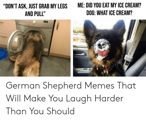 "Bae, Memes, and German Shepherd: ME: DID YOU EAT MY ICE CREAM?  ""DON'T ASK, JUST GRAB MY LEGS  DOG: WHAT ICE CREAM?  AND PULLT  @Friend of Bae German Shepherd Memes That Will Make You Laugh Harder Than You Should"