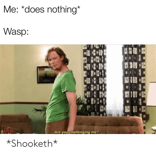wasp: Me: *does nothing*  Wasp  Are you challenging me? *Shooketh*