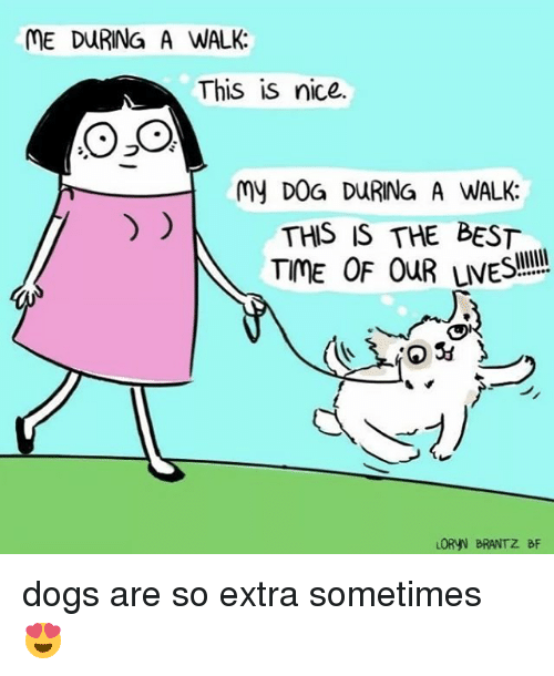 Dogs, Best, and Relatable: ME DURING A WALK:  This is nice.  OSO  My D0G DURING A WALK:  THIS IS THE BEST  TME OF OuR LVES  ORYN BRANTZ BF dogs are so extra sometimes 😍