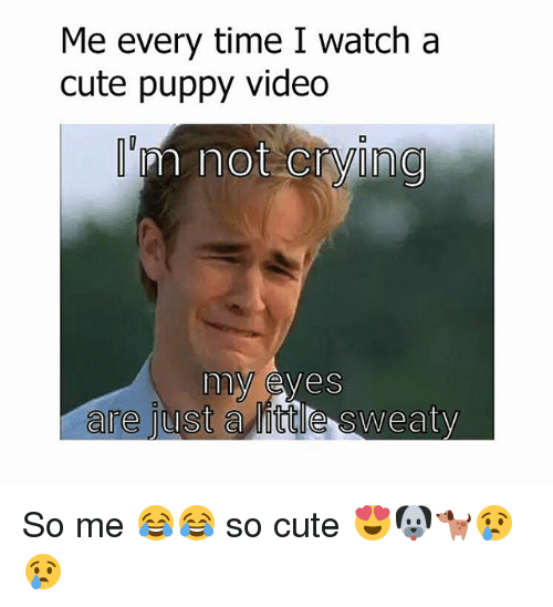 cute puppy: Me every time I watch a  cute puppy video  m not crying  my eyes  are just  a little sweaty So me 😂😂 so cute 😍🐶🐕😢😢