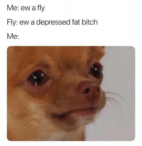 Bitch, Funny, and Fat: Me: ew a fly  Fly: ew a depressed fat bitch  Me: