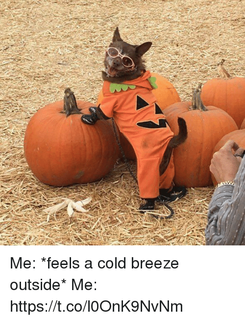 Girl Memes, Cold, and Breeze: Me: *feels a cold breeze outside*   Me: https://t.co/l0OnK9NvNm