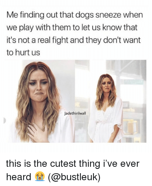 Dogs, Memes, and Fight: Me finding out that dogs sneeze when  we play with them to let us know that  it's not a real fight and they don't want  to hurt us  Jadethirilwall this is the cutest thing i've ever heard 😭 (@bustleuk)