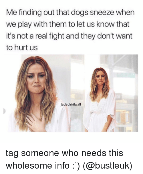 Dogs, Memes, and Tag Someone: Me finding out that dogs sneeze when  we play with them to let us know that  it's not a real fight and they don't want  to hurt us  Jadethirilwall tag someone who needs this wholesome info :') (@bustleuk)
