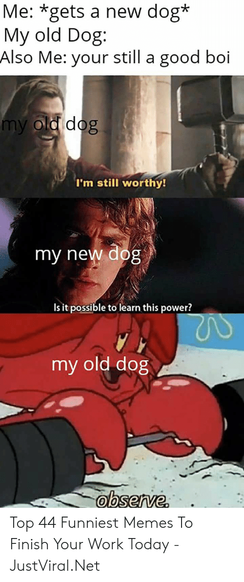 funniest memes: Me: *gets a new dog*  My old Dog  Also Me: your still a good boi  my old dog  I'm still worthy!  my new dog  Is it possible to learn this power?  my old dog Top 44 Funniest Memes To Finish Your Work Today - JustViral.Net