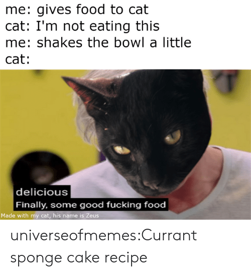 Food, Fucking, and Tumblr: me: gives food to cat  cat: I'm not eating this  me: shakes the bowl a little  cat:  |delicious  Finally, some good fucking food  Made with my cat, his name is Zeus universeofmemes:Currant sponge cake recipe