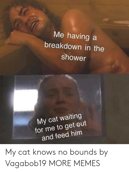 Dank, Memes, and Shower: Me having a  breakdown in the  shower  My cat waiting  for me to get out  and feed him My cat knows no bounds by Vagabob19 MORE MEMES