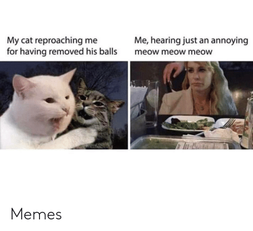 Memes, Annoying, and Cat: Me, hearing just an annoying  My cat reproaching me  for having removed his balls  meow meow meow Memes