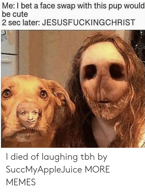 I Died: Me: I bet a face swap with this pup would  be cute  2 sec later: JESUSFUCKINGCHRIST I died of laughing tbh by SuccMyAppleJuice MORE MEMES