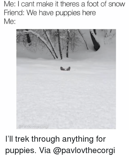 Memes, Puppies, and Snow: Me: I cant make it theres a foot of snow  Friend: We have puppies here  Me:  @Pavlovthecorgi I'll trek through anything for puppies. Via @pavlovthecorgi