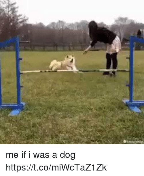 Relatable, Dog, and Was: me if i was a dog https://t.co/miWcTaZ1Zk