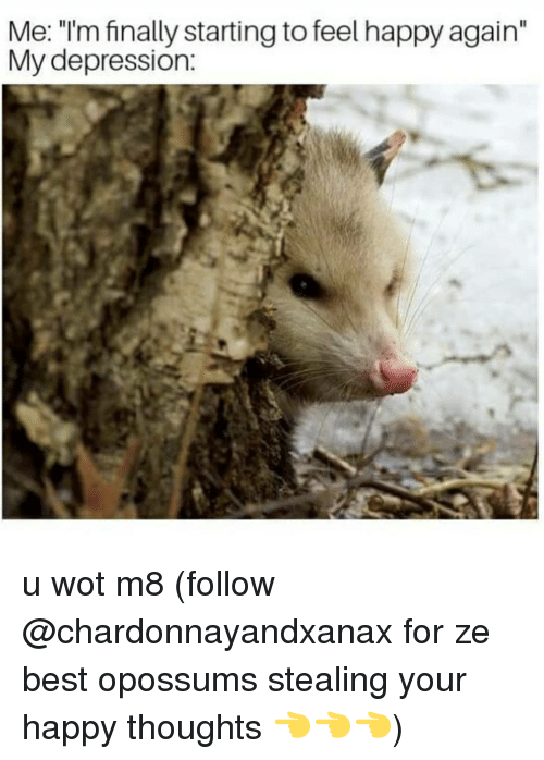"""Memes, Best, and Depression: Me: """"I'm finally starting to feel happy again""""  My depression: u wot m8 (follow @chardonnayandxanax for ze best opossums stealing your happy thoughts 👈👈👈)"""
