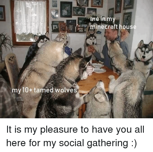 pleasure: me in m  minecraft hous  my 10+ tamed wolves It is my pleasure to have you all here for my social gathering :)