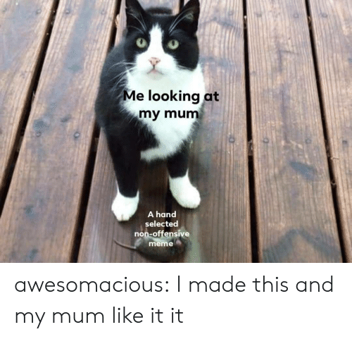 Offensive: Me looking at  my mum  A hand  selected  non-offensive  meme awesomacious:  I made this and my mum like it it