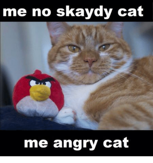 Angry Cat: me no skaydy Ca  me angry cat