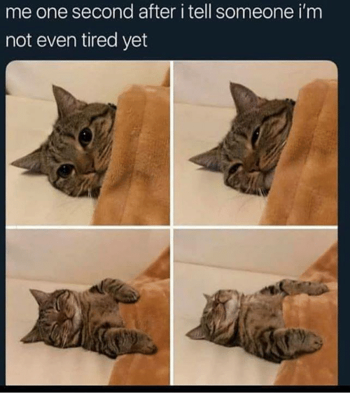 Funny, Tumblr, and One: me one second after i tell someone i'm  not even tired yet