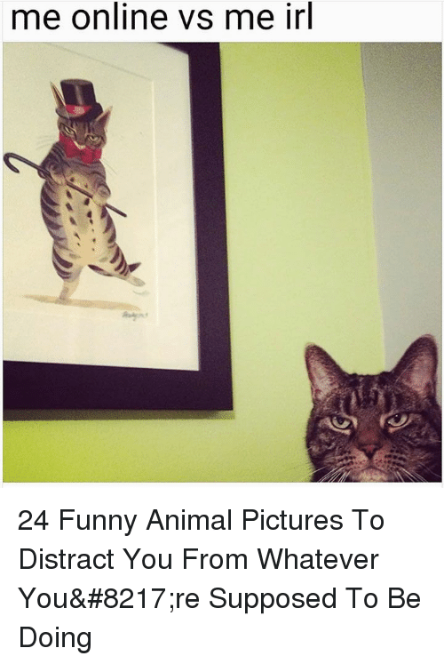 Funny, Animal, and Pictures: me online vs me irl 24 Funny Animal Pictures To Distract You From Whatever You're Supposed To Be Doing