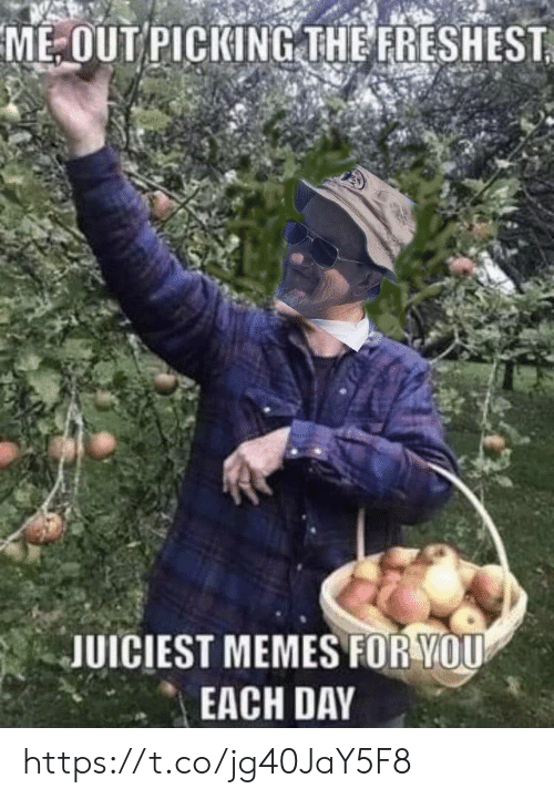 Memes, 🤖, and Day: ME-OUT PICKING THE FRESHEST  JUICIEST MEMES FOR YOU  EACH DAY https://t.co/jg40JaY5F8