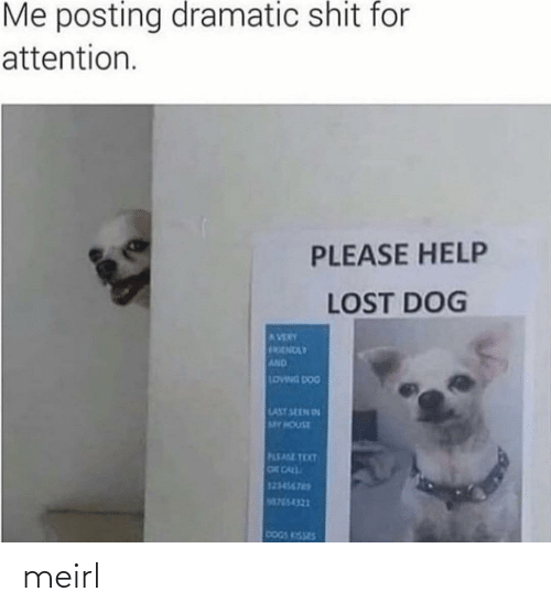 Last: Me posting dramatic shit for  attention.  PLEASE HELP  LOST DOG  AVERY  FRENDLY  AND  LOWNG DOG  LAST SEEN IN  MY HOUSE  PLEASE TEXT  OR CALL  123456765  M755-4321  DOGS KISSES meirl