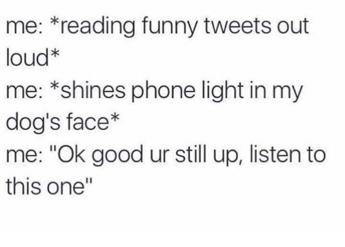 "Funny, Shinee, and Shining: me: reading funny tweets out  loud  me: *shines phone light in my  dog's face  me: ""Ok good ur still up, listen to  this one"""