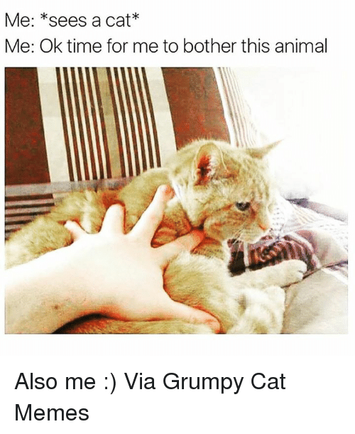 Grumpy Cats: Me: *sees a cat  Me: Ok time for me to bother this animal Also me :) Via Grumpy Cat Memes