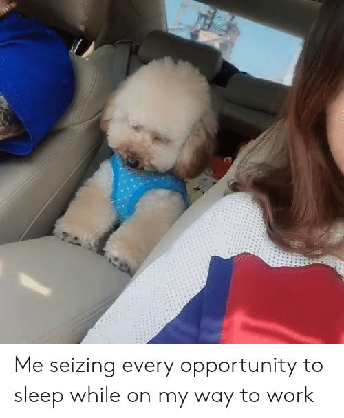 Dank, Work, and Opportunity: Me seizing every opportunity to sleep while on my way to work