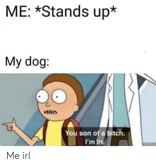 Bitch, Irl, and Me IRL: ME: *Stands up*  My dog:  You son of a bitch.  I'm in. Me irl