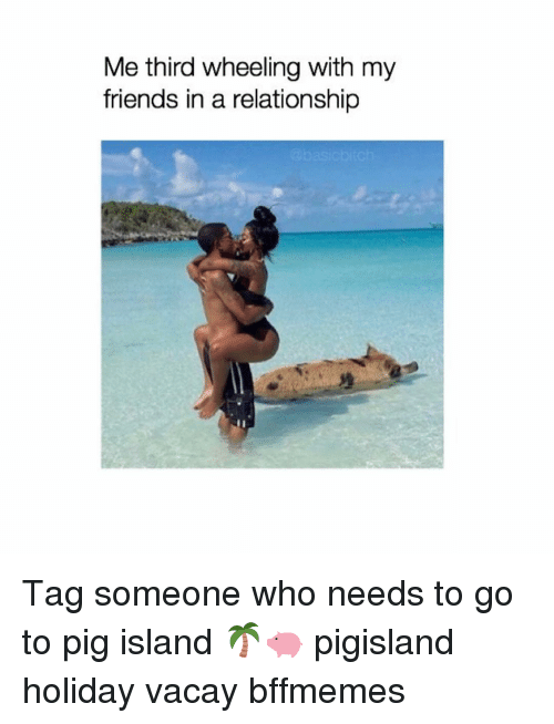 Wheeling: Me third wheeling with my  friends in a relationship Tag someone who needs to go to pig island 🌴🐖 pigisland holiday vacay bffmemes