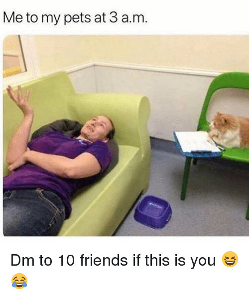 Friends, Memes, and Pets: Me to my pets at 3 a.m Dm to 10 friends if this is you 😆😂