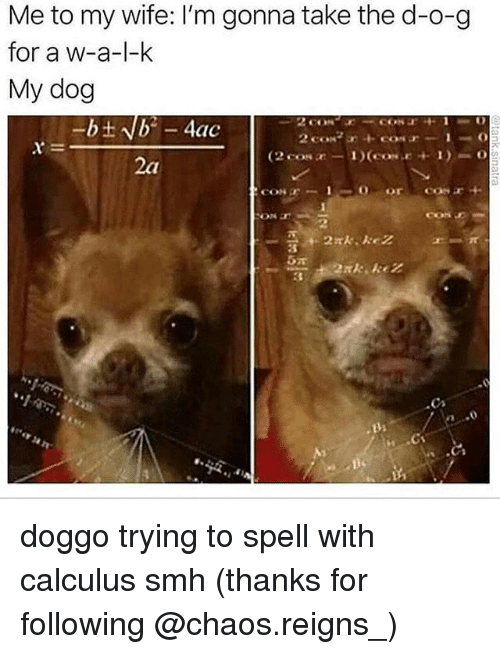 Memes, Smh, and Wife: Me to my wife: I'm gonna take the d-o-g  for a w-a-l-k  My dog  CON塗-  Bs doggo trying to spell with calculus smh (thanks for following @chaos.reigns_)