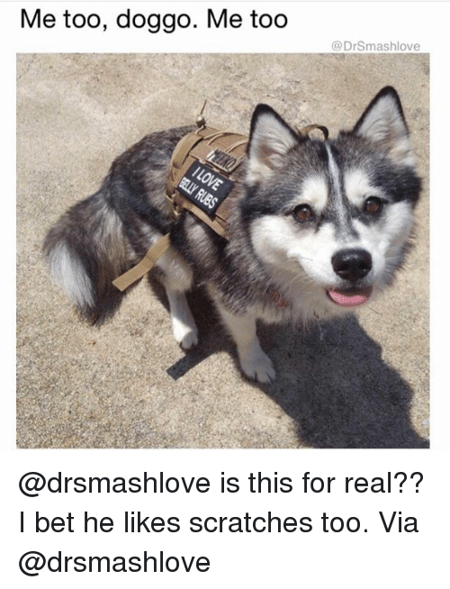 I Bet, Memes, and 🤖: Me too, doggo. Me too  @DrSmashlove @drsmashlove is this for real?? I bet he likes scratches too. Via @drsmashlove