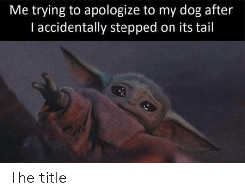 Dog, I Accidentally, and Tail: Me trying to apologize to my dog after  I accidentally stepped on its tail The title