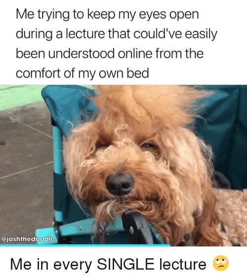 Single, Been, and Online: Me trying to keep my eyes open  during a lecture that could've easily  been understood online from the  comfort of my own bed  @joshthedoodle Me in every SINGLE lecture 🙄