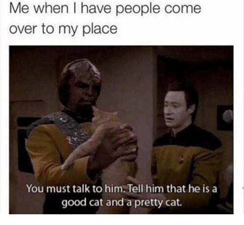 Come Over, Memes, and Good: Me when have people come  over to my place  You must talk to him. Tell him that he is a  good cat and a pretty cat.
