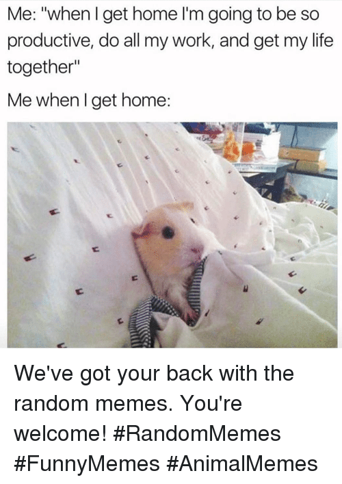 "Life, Memes, and Work: Me: ""when I get home I'm going to be so  productive, do all my work, and get my life  together""  Me when l get home: We've got your back with the random memes. You're welcome! #RandomMemes #FunnyMemes #AnimalMemes"