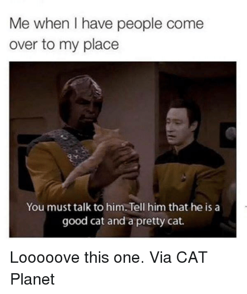 Come Over, Memes, and 🤖: Me when I have people come  over to my place  You must talk to him.Tell him that he is a  good cat and a pretty cat. Looooove this one. Via CAT Planet