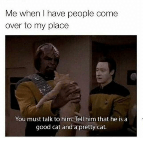 Come Over, Memes, and Good: Me when I have people come  over to my place  You must talk to him. Tell him that he is a  good cat and a pretty cat.