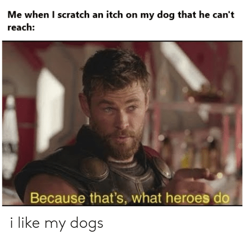 Dogs, Reddit, and Heroes: Me when I scratch an itch on my dog that he can't  reach:  Because that's, what heroes do i like my dogs