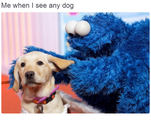 Dog,  See, and I-See: Me when I see any dog