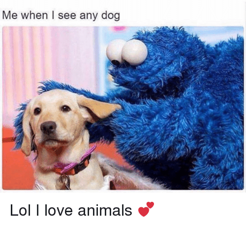 Animals, Funny, and Lol: Me when I see any dog Lol I love animals 💕