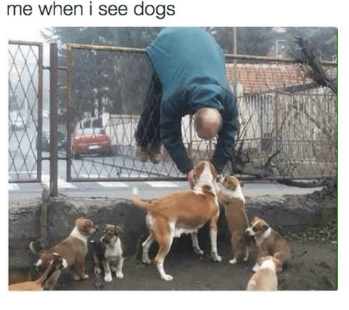 Dogs,  See, and I-See: me when i see dogs