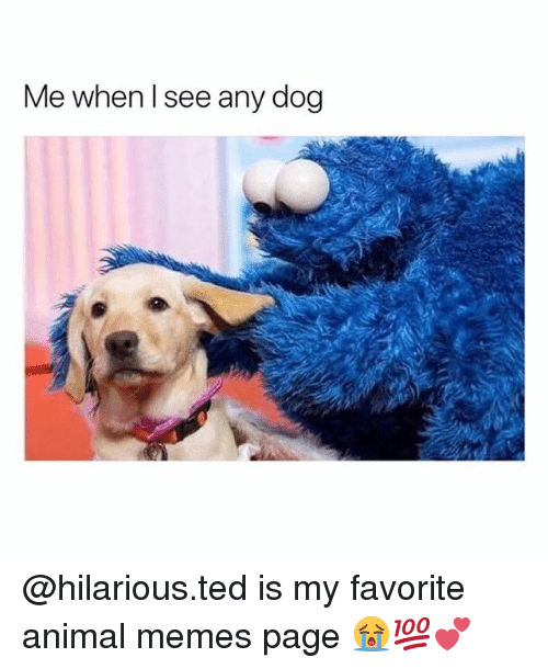 Memes, Ted, and Animal: Me when l see any dog @hilarious.ted is my favorite animal memes page 😭💯💕