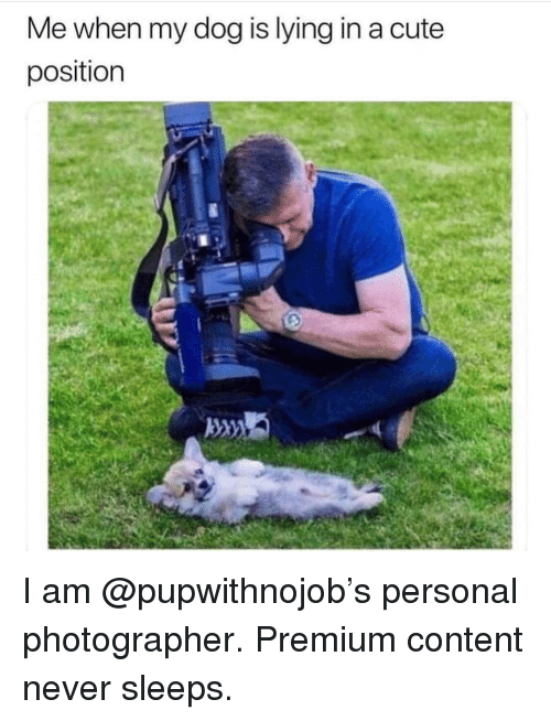 Cute, Girl Memes, and Content: Me when my dog is lying in a cute  position I am @pupwithnojob's personal photographer. Premium content never sleeps.