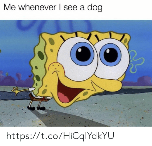 Memes, 🤖, and Dog: Me whenever l see a dog https://t.co/HiCqIYdkYU