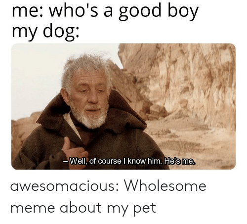 whos a: me: who's a good boy  my dog:  те.  Well, of course l know him. He's me awesomacious:  Wholesome meme about my pet